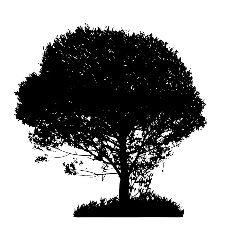 illustrati: Tree Silhouette Isolated on White Backgorund  Vecrtor Illustrati