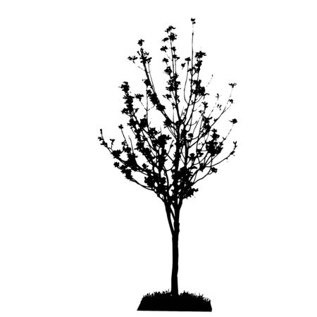 coniferous tree: Tree Silhouette Isolated on White Backgorund  Vecrtor Illustrati