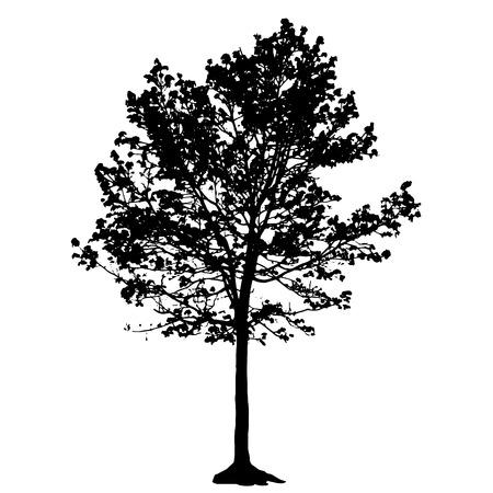 arboles blanco y negro: Silueta del árbol aislado Vectores
