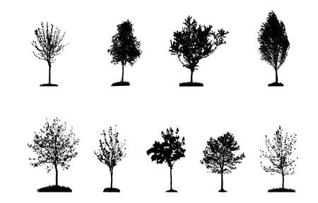huge tree: Set of Tree Silhouette Isolated