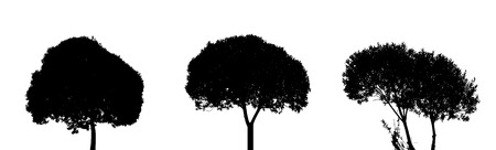 Set of Tree Silhouette Isolated on White Backgorund  Vecrtor Ill Vector