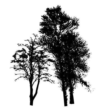 illustrati: Tree Silhouette Isolated on White Backgorund. Vecrtor Illustrati Illustration