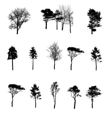 arboles blanco y negro: Conjunto de la silueta del árbol aislado en blanco backgorund. Vecrtor Ilustración
