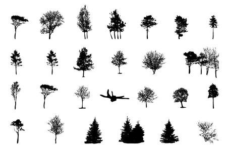 coniferous forest: Conjunto de la silueta del árbol aislado en blanco backgorund. Vecrtor Ilustración