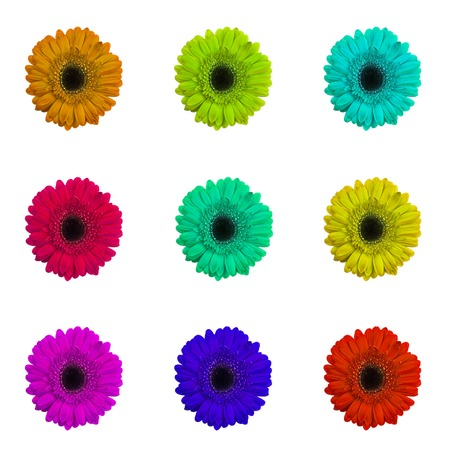big daisy: Set of Gerbera Flower Isolated on White Background Stock Photo