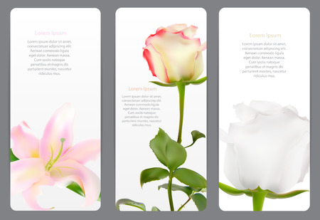 white lilly: Beautiful Floral Cards with  Realistic Flowers Rose and Lilly Ve Illustration