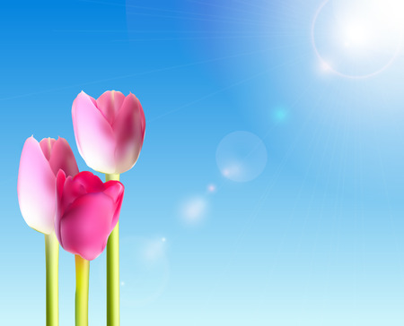 head shot: Beautiful Pink Tulips Against Shiny Sky Vector Illustration Illustration