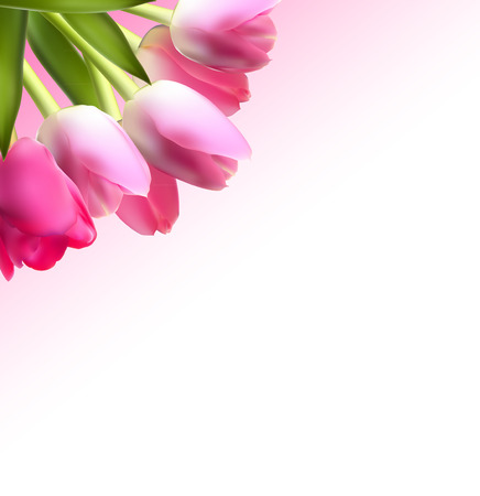 flowers on white: Beautiful Pink Realistic Tulip Background Vector