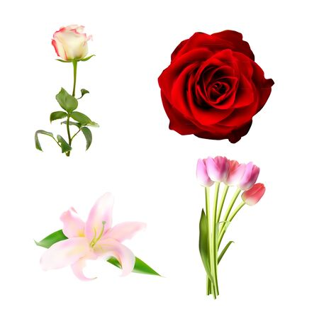 white lilly: Realistic Flower Set High Quality Vector Illustration