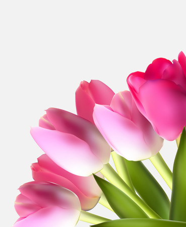 head shot: Beautiful Pink Realistic Tulip Background Vector Illustration
