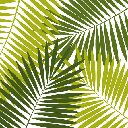 leaf background: Palm Leaf  Background Vector Illustration Illustration