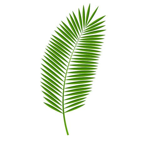 frutas tropicales: Ilustración de hoja de palma del vector