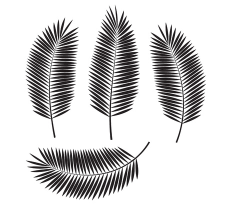 palm tree silhouette: Palm Leaf Vector Illustration