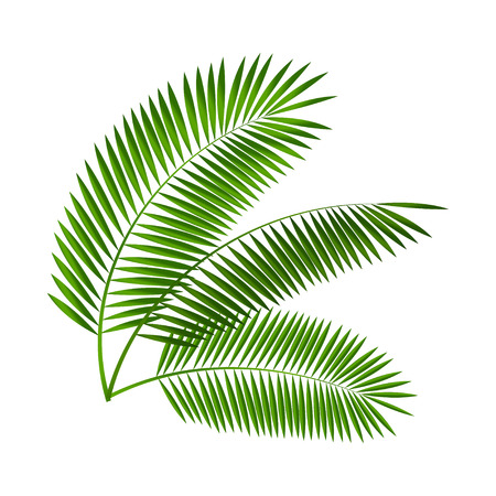 green and black: Palm Leaf Vector Illustration