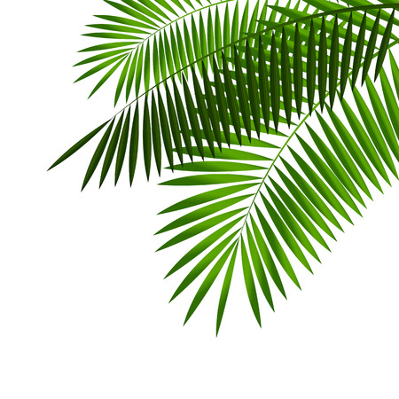 Palm Leaf Vector Illustration Reklamní fotografie - 40106198