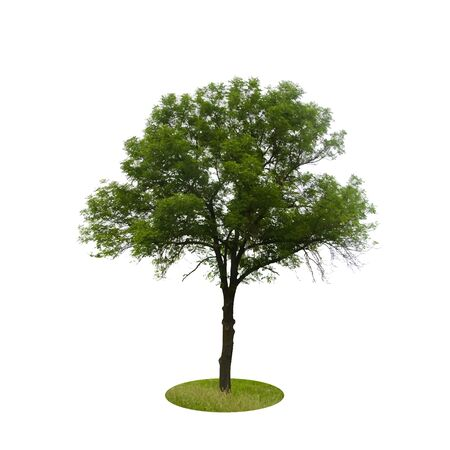 backgorund: Colored Silhouette Tree Isolated on White Backgorund. Vector Illustration. EPS10