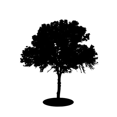tree silhouettes: Tree Silhouette Isolated on White Backgorund. Vector Illustration. EPS10