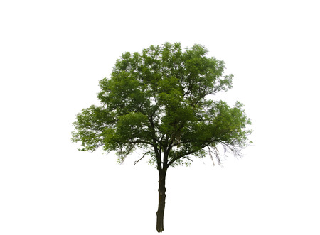Colored Silhouette Tree Isolated on White Backgorund. Vector Illustration. EPS10