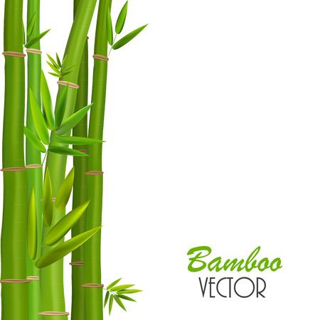 green bamboo: Green bamboo Illustration