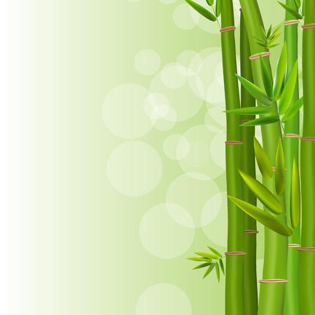 tropical garden: Green bamboo Illustration