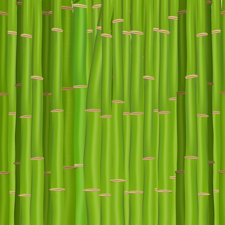 japanese background: Green bamboo Illustration