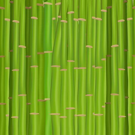 japones bambu: Verde de bamb�
