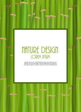 asian gardening: Green bamboo Illustration