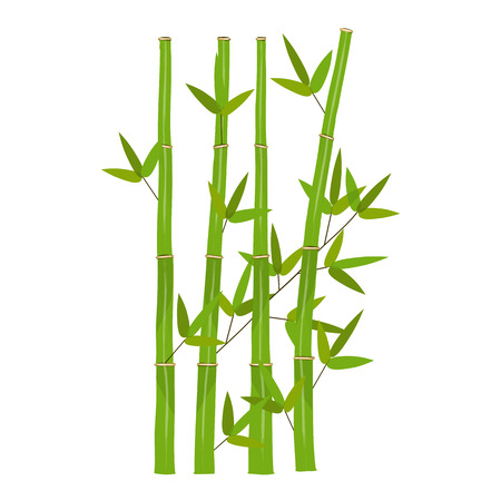 bambu: Verde de bambú