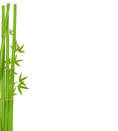 green bamboo: Green bamboo Illustration