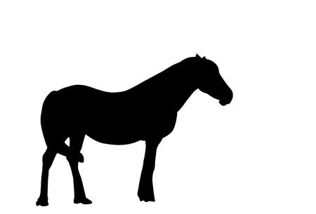 horse show: Silhouette Horse. Vector Illustration. EPS10 Illustration