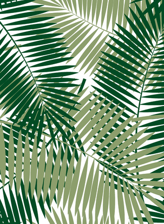Palm Leaf Vector Frame Background Illustration EPS10