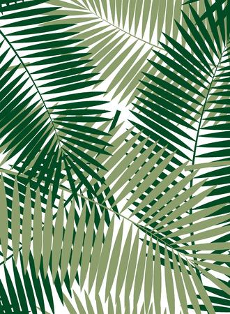 Palm Leaf Vector Frame Background Illustration EPS10