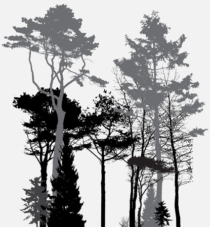 in the woods: Image of Nature. Tree Silhouette. Eco banner. Vector Illustration. EPS10