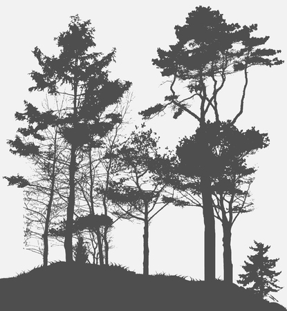 pine forest: Image of Nature. Tree Silhouette. Vector Illustration. EPS10 Illustration