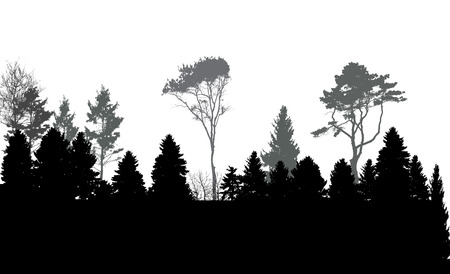 trees silhouette: Image of Nature. Tree Silhouette. Eco banner. Vector Illustration EPS10
