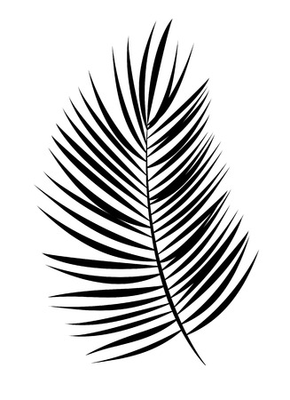 Palm Leaf Vector Background Isolated Illustration EPS10 Banco de Imagens - 51759050