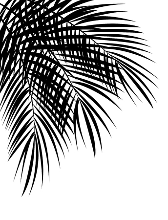 arboles blanco y negro: Hoja de palmera Vector fondo aislado EPS10