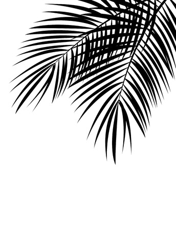 palm tree silhouette: Palm Leaf Vector Background Isolated Illustration EPS10