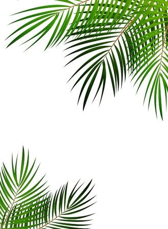 Palm Leaf Vector Background Isolated Illustration EPS10 Vektorové ilustrace