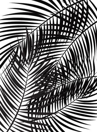 leaf illustration: Palm Leaf Vector Background Isolated Illustration EPS10