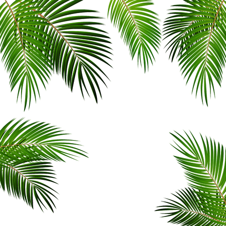 Palm Leaf Vector Background Isolated Illustration EPS10 Stock fotó - 51759167