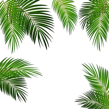 cartoon frame: Palm Leaf Vector Background Isolated Illustration EPS10