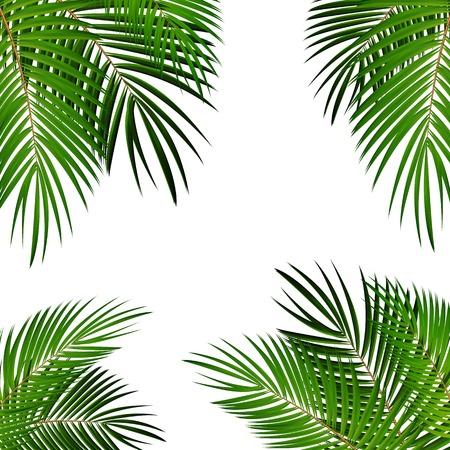 Feuille de palmier vecteur de fond isolé Illustration EPS10 Vecteurs