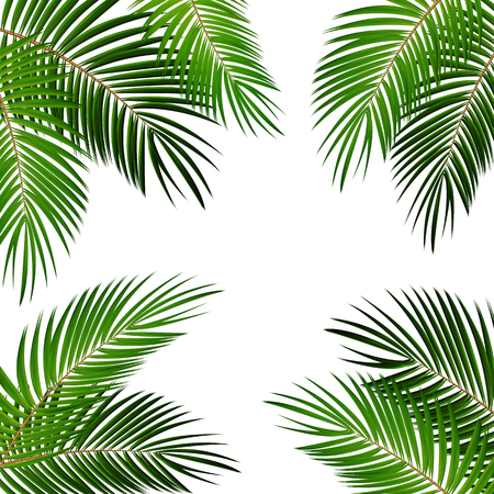 rainforest: Palm Leaf Vector Background Illustration EPS10 Illustration