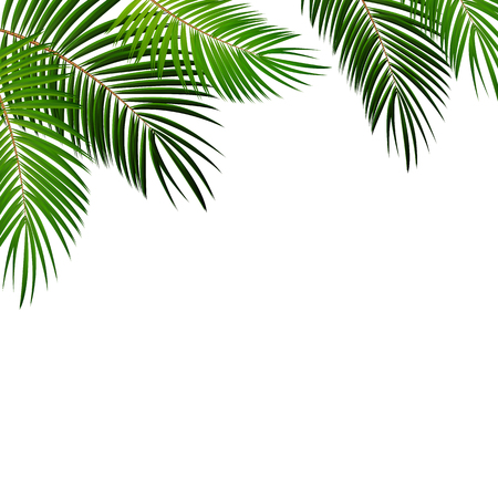 white beach: Palm Leaf on White Background with Place for Your Text Vector Illustration EPS10