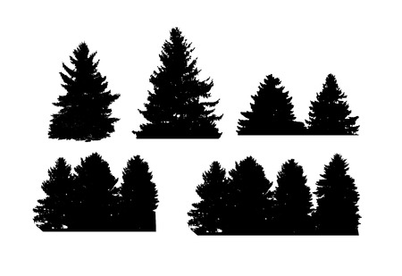 coniferous tree: Image of Nature, Tree Silhouette. Vector Illustration EPS10