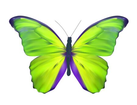 green butterfly: Green Butterfly Isolated on White Realistic Vector Illustration