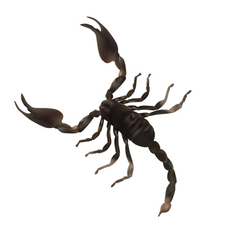 cartoon scorpion: Black Large Scorpion Realistic