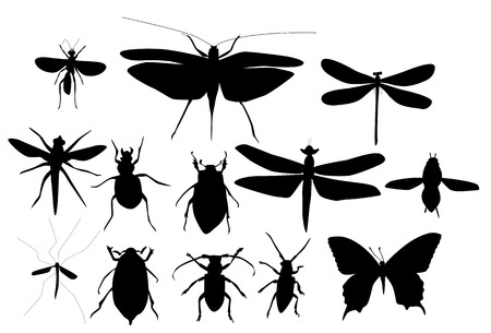 dragonflies: Silhouettes Set of Beetles, Dragonflies and Butterflies Illustration