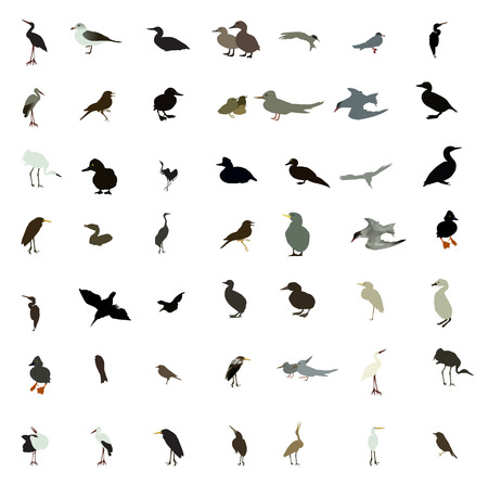gull: Set of black and white silhouettes of birds: dove, duck, gull, peacock and hummingbird.